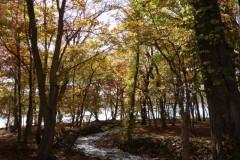 [洞爺湖畔]湖と森のガーデン
